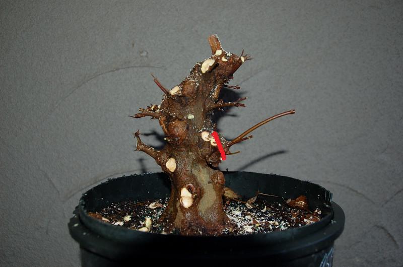 branch redded